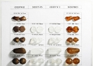 Fire Polished Beads_70